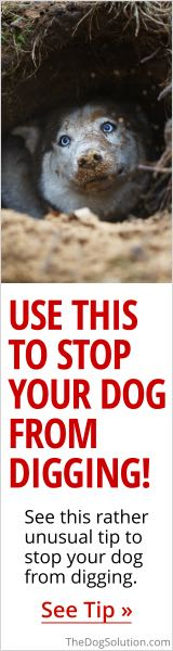 The Dog Solution